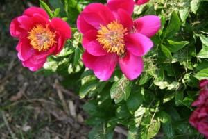 Blumen_Lelk_050